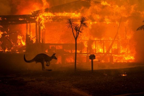 حداقل نیم ملیارد حیوان بر اثر آتش سوزی در استرالیا از بین رفتند