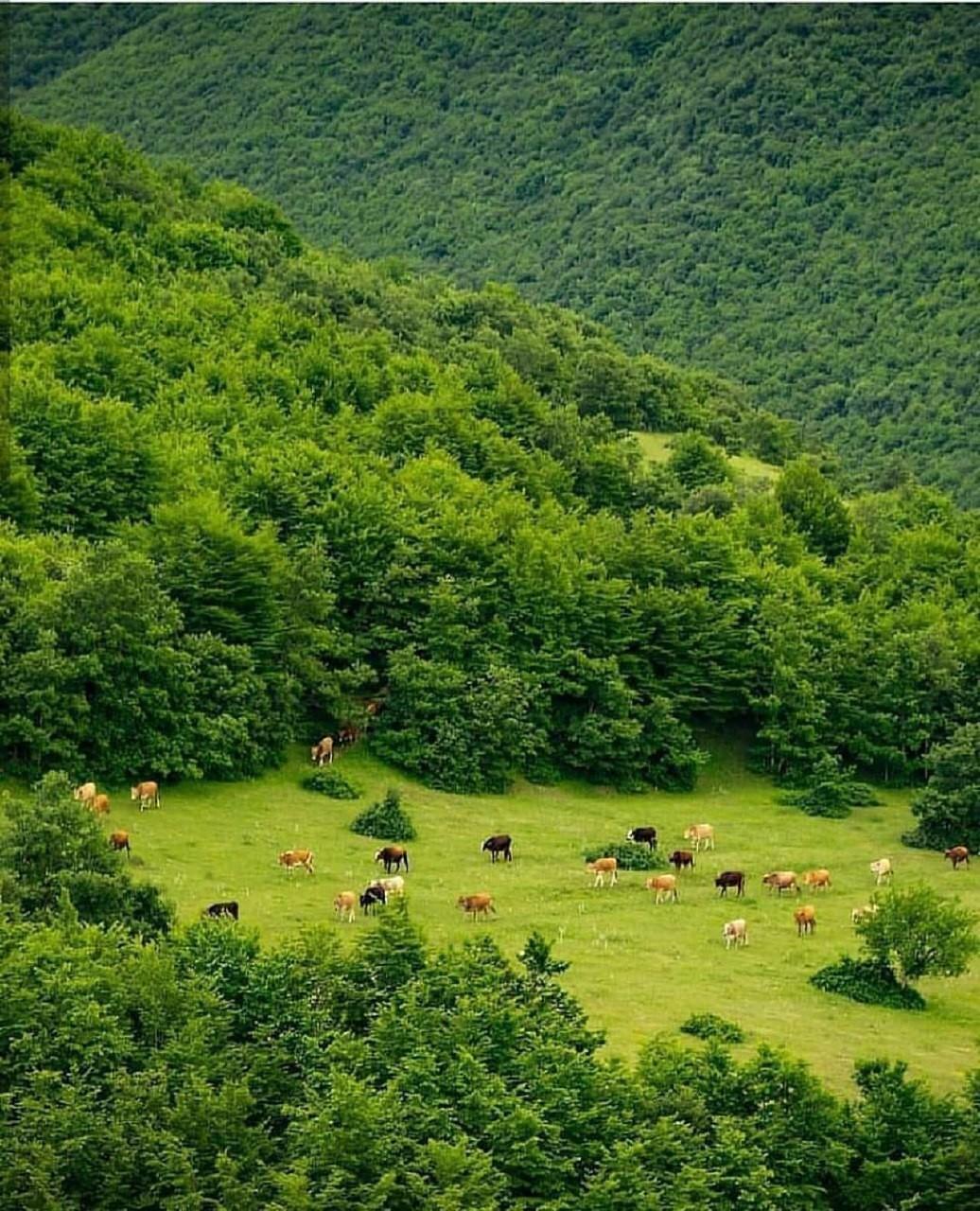 جنگل های زیبای ارسباران
