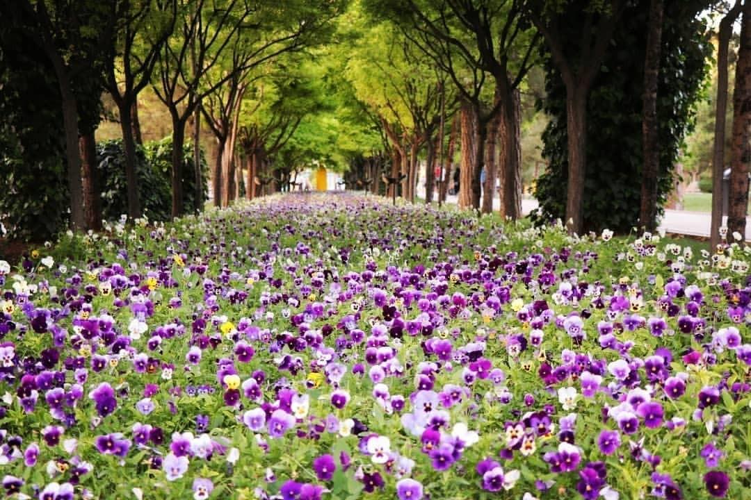 جاذبه های گردشگری - باغ جنت شیراز