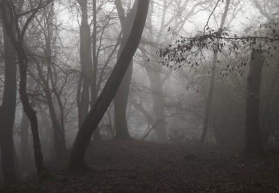 جنگل فریاد درینگ | Dering Screaming Woods