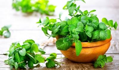 درمان سرما خوردگی با داروهای گیاهی