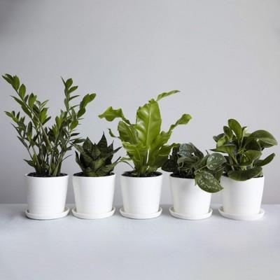 گیاهان سایه دوست مناسب آپارتمان و محل کار