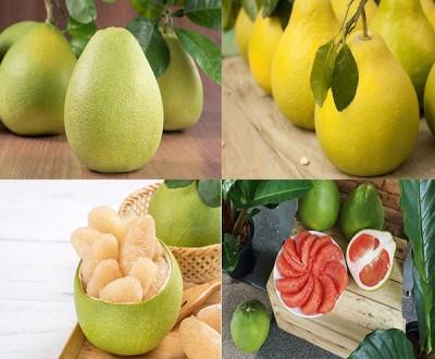 پوملوسالم ترین میوه دنیا درمیان مرکبات
