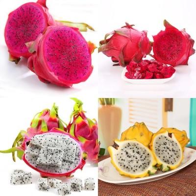 خواص و فوائد میوه اژدها و روش خوردن این میوه
