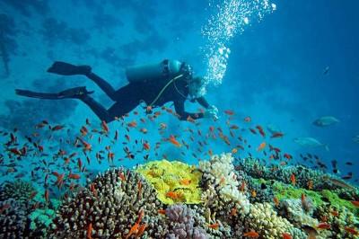 غواصی و دنیای زیر آب