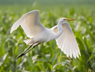 زندگی حس غریبی است که یک مرغ مهاجر دارد