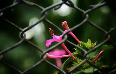 چو دل در مهر شیرین بست فرهاد