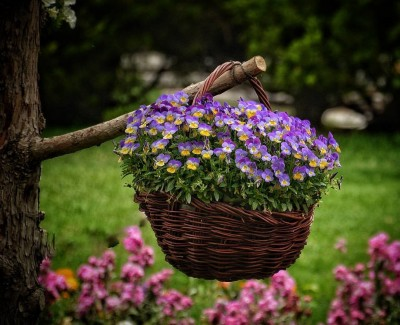 شاخه ای از آن گل