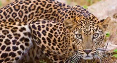 حیوانات خطرناک و کشنده جهان (بخش دوم)