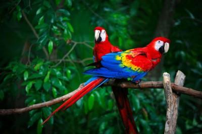 مروری بر حیوانات زیبا و جذاب دنیا