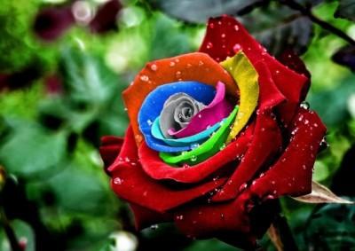 نگاهی به زیباترین گل های جهان