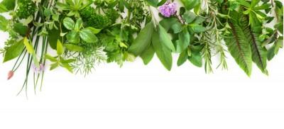برای تقویت سیستم ایمنی و مبارزه با ویروس ها از گیاهان ضد ویروسی استفاده کنید