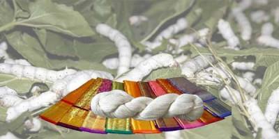ابریشم  |تاریخچه ، تولید و محصولات