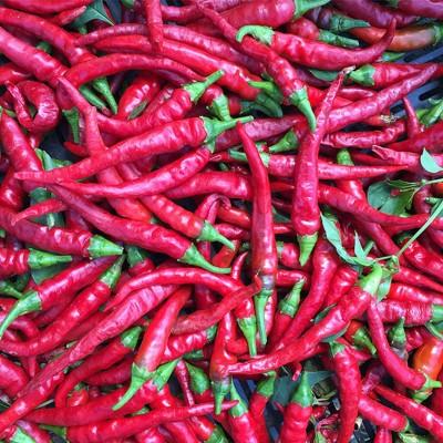 خواص فلفل قرمز | واقعیت های تغذیه ای و اثرات سلامتی