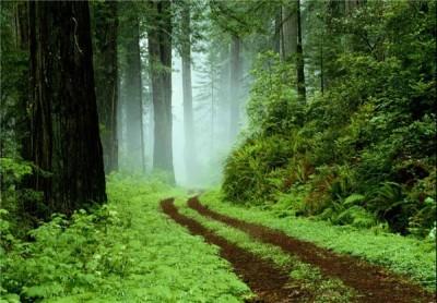 شمال ایران|جنگل گیسوم بهشت با طبیعت شگفت انگیز