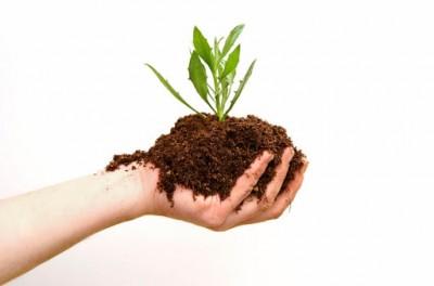 نحوه درست کردن خاک برگ