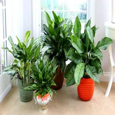 نحوه پرورش و نگهداری از گیاهان