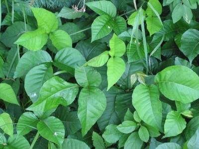 درباره گیاهان سمی | پیشگیری و درمان سموم طبیعی