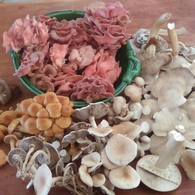 در طبیعت چند نوع قارچ وجود دارد؟