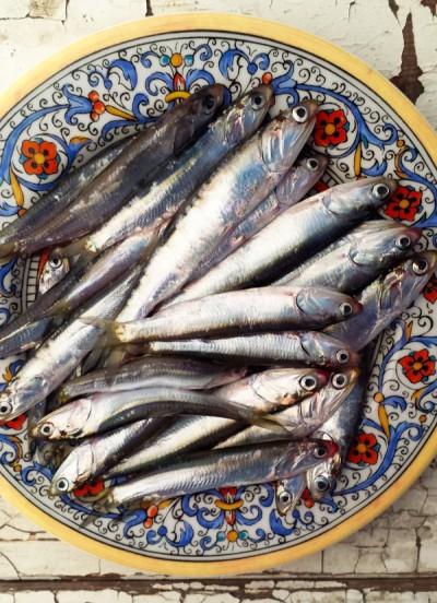 ماهی های آنچوی  یا کولی چه نوع ماهی هستند؟