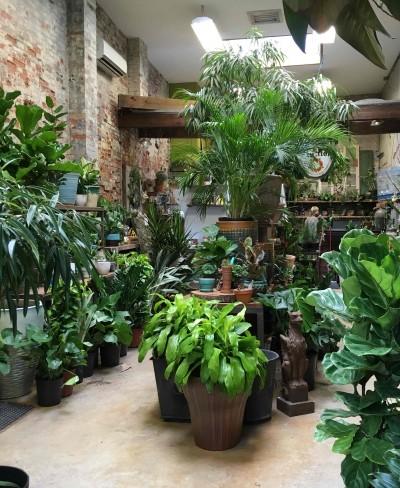 مراقبت از گیاهان آرام بخش آپارتمانی