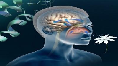 علل از دست دادن حس بویایی و درمان آن