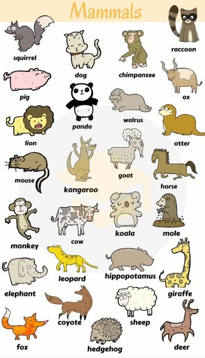 اسامی پستانداران به زبان انگلیسی