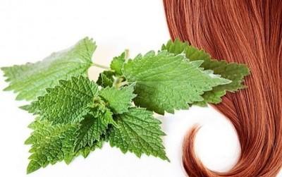 مزایای گزنه برای موهای شما