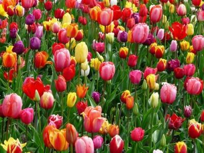گل در بر و می در کف و معشوق به کام است