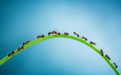 خلاص شدن از شر مورچه ها