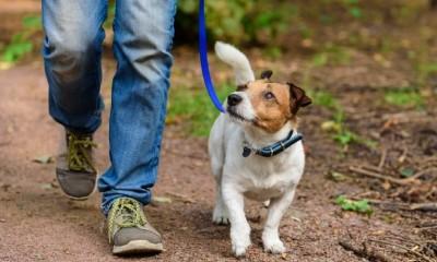 پیاده روی با سگ یکی از بهترین راه ها برای سالم نگه داشتن آنها