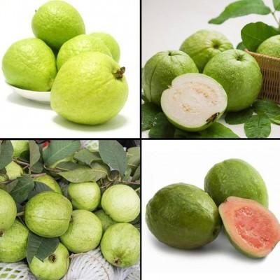 8 فواید میوه و برگ گواوا برای سلامتی