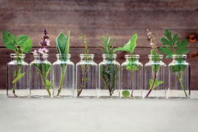 کاهش درد مفاصل با تاثیر گیاهان دارویی