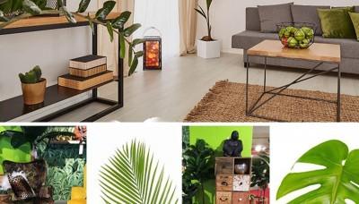 مبل سبز شیک: چند ایده طراحی داخلی و نکاتی درباره آن!